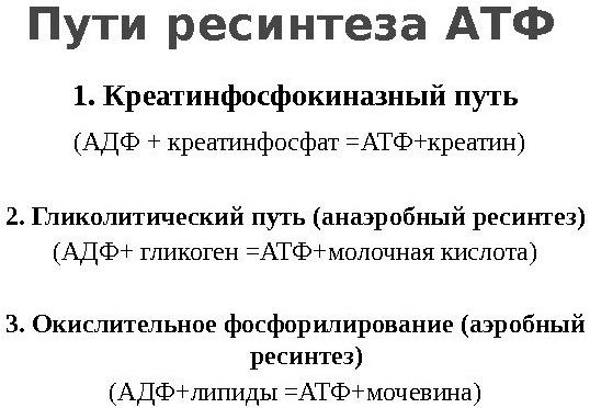 Пути ресинтеза АТФ